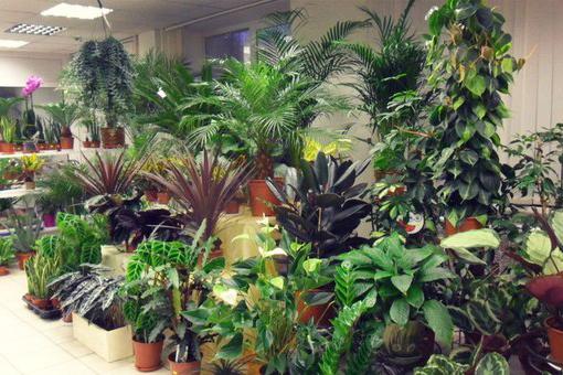 Классификация комнатных растений