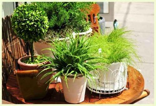 5 натуральных удобрений для комнатных цветов
